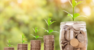 Wachstum 310x165 - Genossenschaftsbanken expandieren im Kreditgeschäft